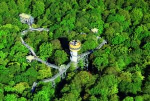 Baumkronenpfad im Nationalpark Hainich - ein Erlebnis für Alle