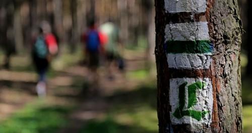 Markierung Lutherweg - grünes L auf weißem Grund