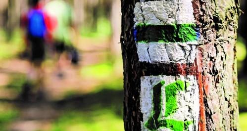 Wegmarkierung zum Lutherweg - grünes L auf weißem Grund
