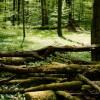 Kunst im Wald erlebbar machen