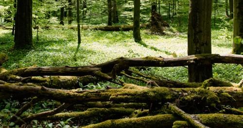 Holzstämme brach liegend im grünen Wald