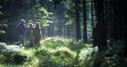 Wanderer gehen über eine Lichtung im Wald