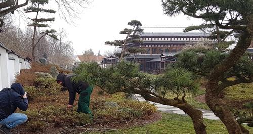 Die Mitarbeiter des Gartenbauamts bereiten die Gartensaisonöffnung 2018 im Japani-schen Garten vor.