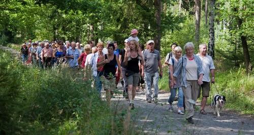 Wanderer mit Wanderführer im Wald