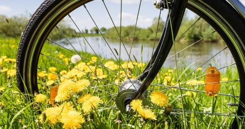 Rad eines Fahrrades in der Wiese
