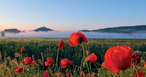 Wachsenburg am Morgen mit rotem Mohn