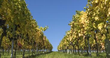 Saale-Unstrut Wein und Land erleben