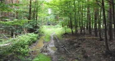 Antragsfrist für Wegepflege an A- und B-Wanderwegen läuft