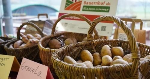 Impression vom Netzwerktag der Dachmarke Rhön mit verschiedenen Kartoffelsorten von regioanlen Bauernhöfen, ansprechend präsentiert in Weidekörben