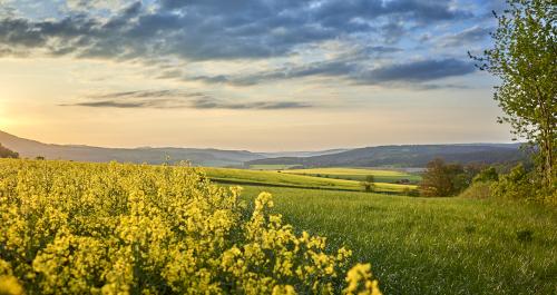 Landschaft mit Blumen, Wiesen und Bergen