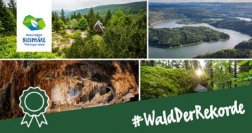 #WaldDerRekorde: Superlative im Thüringer Wald