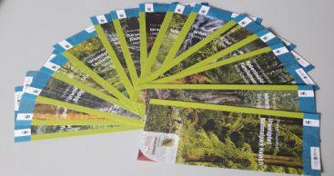 Thüringens Urwälder von morgen