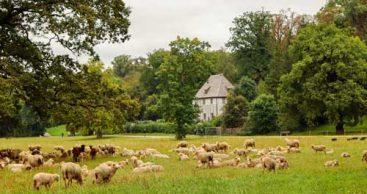 Lonley Planet-Empfehlung: Goethes Gartenhaus in Weimar
